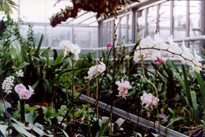 Focus sur les serres de jardin