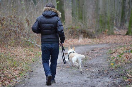 Bien éduquer son chien avec le collier de dressage Nom du fic
